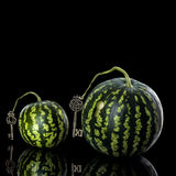 Round watermelon on a black background. Small watermelon on a black background reflection Stock Images