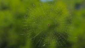 Round Web With Spider At Nature stock video