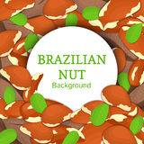 Round white frame on brazilian nut background. Vector card illustration. Circle Nuts , brazilnut fruit in the shell Royalty Free Stock Image