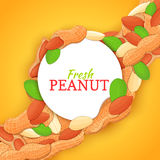 Round white frame on peanut nut diagonal composition background. Vector card illustration. Stock Photography