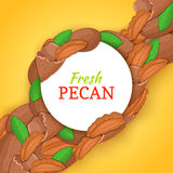 Round white frame on pecan nut diagonal composition background. Vector card illustration. Stock Photo