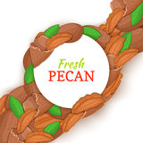 Round white frame on pecan nut diagonal composition background. Vector card illustration. Royalty Free Stock Image