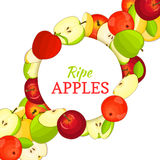 Round white frame on ripe apple diagonal composition background. Vector card illustration. Delicious fresh and juicy Stock Photos