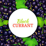 Round white label on ripe black currant background. Vector card illustration. Royalty Free Stock Images