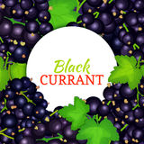 Round white label on ripe black currant background. Vector card illustration. Black berry fresh and juicy currant frame Royalty Free Stock Image