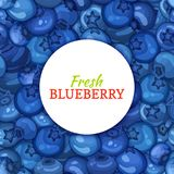 Round white label on ripe blueberry background. Vector card illustration. Blue berry fresh and juicy bilberry frame for Stock Photo