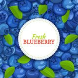 Round white label on ripe blueberry and leaves background. Vector card illustration. Blue berry fresh and juicy bilberry Stock Images