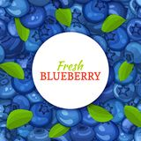 Round white label on ripe blueberry and leaves background. Vector card illustration. Blue berry fresh and juicy bilberry Stock Photos