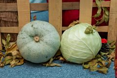 Round white pumpkin and cabbage. Pumpkin decor with autumn cracks . Pumpkin in autumn. Round white pumpkin and cabbage. Pumpkin d cor with autumn cracks Royalty Free Stock Photos