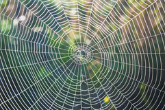 Round Wide Web in drops of dew. Royalty Free Stock Photography
