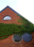 Round Window with Ivy. A round window on a brick building with green ivy Royalty Free Stock Image