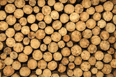 Round wood logs background Royalty Free Stock Photos
