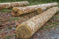 Round wood logs for making furniture Royalty Free Stock Photography