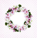 Round wreath with apple and peach tree flowers. Isolated on white and pink polka dot background. Flat lay Royalty Free Stock Photos