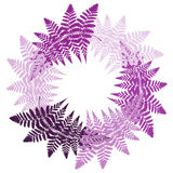 Round wreath of fern. Fern leaves in different tint of the purple color  are positioning in a circle Royalty Free Stock Photo