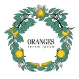 Round wreath of leaves and orange fruit. Vector hand drawn frame sketch style. Vintage illustration. Logo template. Retro banner Royalty Free Stock Photography