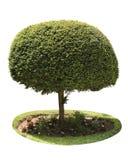 Round zielony drzewo Zdjęcia Royalty Free