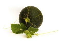Round zucchini Zdjęcia Stock