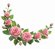 Rounded border with roses branches  isolated in white. Stock Photos