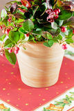 Rounded gaultheria plant Royalty Free Stock Photo
