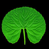 Rounded green leaf Royalty Free Stock Image