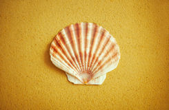 Rounded half of scallop shell on sand Stock Image