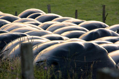 Rounded hay bales Royalty Free Stock Photography