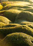 Rounded hedge Royalty Free Stock Photos