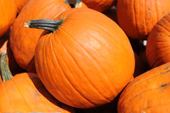 Rounded pumpkins Stock Images