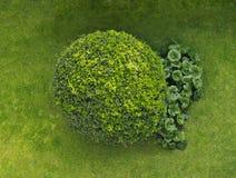 Rounded shrub stock image