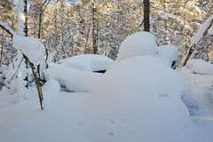 The rounded snow in the forest Stock Photography