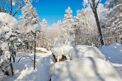 The rounded snow and hard rime of forest Royalty Free Stock Images
