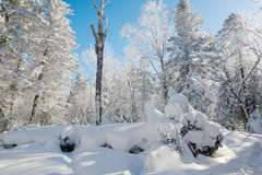 The rounded snow and hard rime Royalty Free Stock Photo