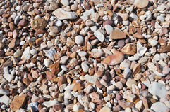 Rounded stone on the beach Stock Image