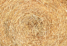 Rounded straw bale Royalty Free Stock Photography