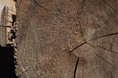 Rounded transverse section of old large tree, with longitudinal cracks. Rounded transverse section of an old large tree, with longitudinal cracks Royalty Free Stock Photos
