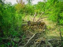 45-Roundwood Imagens de Stock Royalty Free