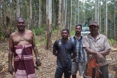 Roup dos trabalhadores da indústria da madeira que levantam para a câmera Fotos de Stock