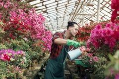 A roupa de trabalho nova da vitória do jardineiro do indivíduo com pulverizadores na moda do corte de cabelo molha em flores co fotos de stock