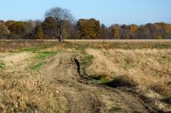 Route à la ferme de potiron Images libres de droits