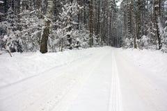 Route à la forêt photos libres de droits