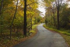 Route à la forêt Photo stock