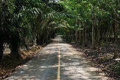Route à la forêt Images libres de droits