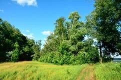 Route à la forêt Images stock
