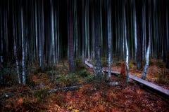 Route à la forêt foncée photographie stock libre de droits