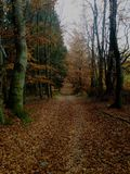 Route à la forêt moyenne image libre de droits