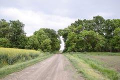 Route à la zone La route passant entre les arbres Voie par le symbole de forêt de la vie Images stock