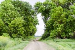 Route à la zone La route passant entre les arbres Voie par le symbole de forêt de la vie Photo libre de droits