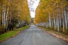 Route à un bois Photo libre de droits