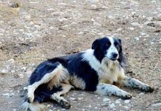 Route abandonnée par chien attendant son maître Images stock